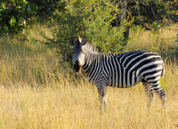 Game Drive in Stanley and Livingstone Private Reserve with Transport from Victoria Falls Town Photos