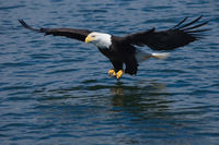 Juneau Shore Excursion: Bears, Whales and Glaciers by Land, Sea and Air Photos