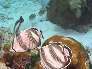 St Kitts Shore Excursion: Pelican Cove Snorkel Tour Photos