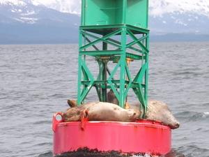 Juneau Shore Excursion: Whale-Watching Adventure Photos