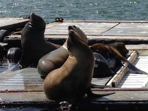 San Diego Seal Tour Photos