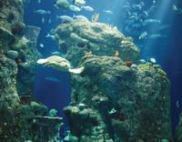 South Carolina Aquarium Admission Photos