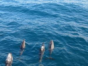 Napali and Ni'ihau 'The Forbidden Island' Kauai Snorkel Cruise Photos