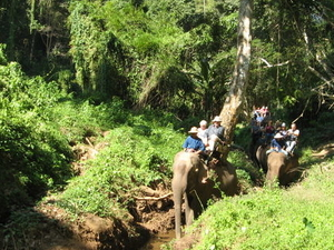 Chiang Dao Elephant Jungle Trek and Ping River Rafting Tour from Chiang Mai Photos