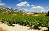 Vitoria and the Rioja Wine Region Photos