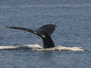 Whale-Watching Tour from Vancouver Photos
