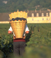 Wine Tasting - Cote de Nuits Region with Two Cellar Visits Photos