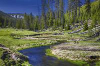 Yellowstone National Park Small-Group Wildlife Safari by Jeep Photos